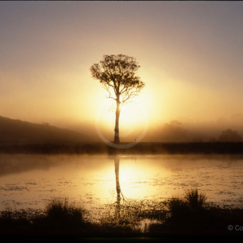 tree_sunrise